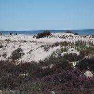 شاطئ الشفار - صفاقس