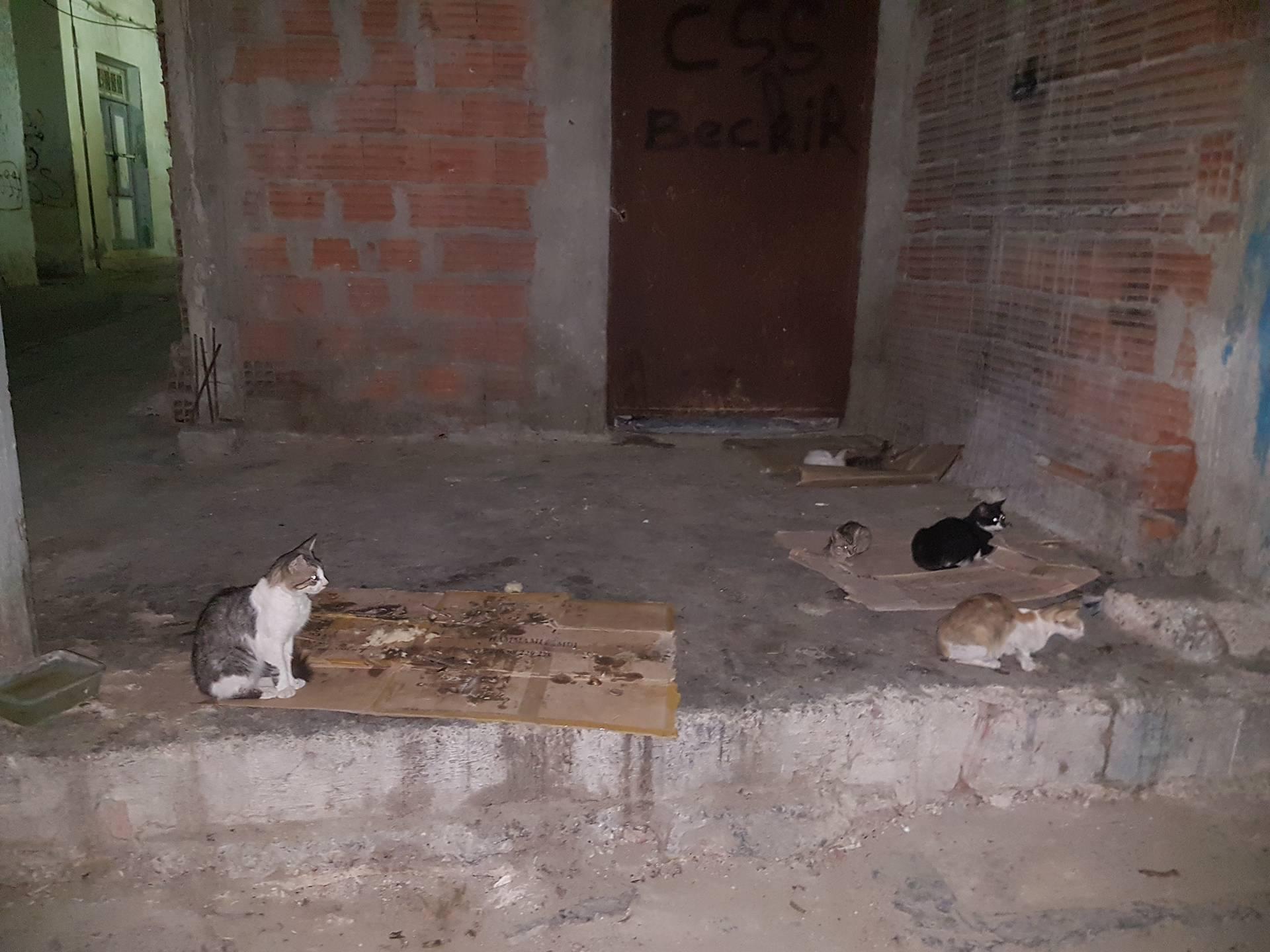 عدد من القطط في المدينة العتيقة بصفاقس