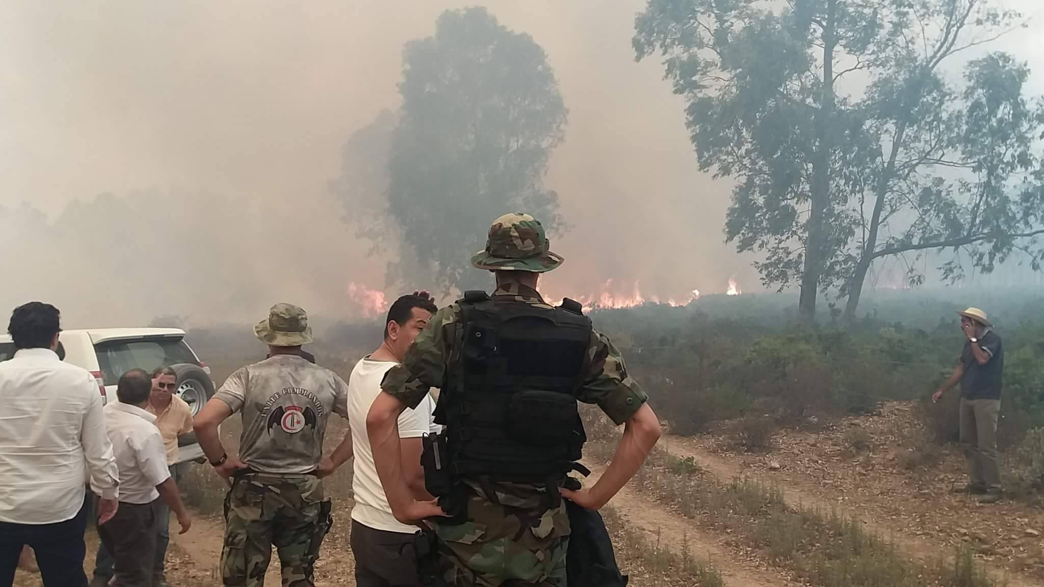 حريق - حرائق - نيران - غابة - غابات - تونس